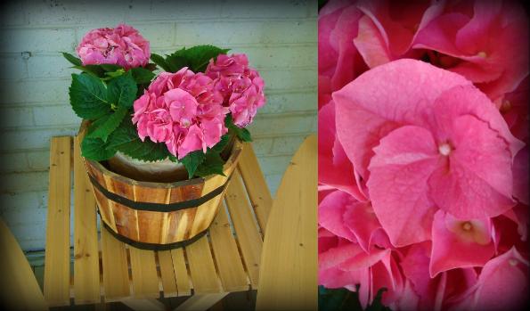 FlowersfromBrit.jpg