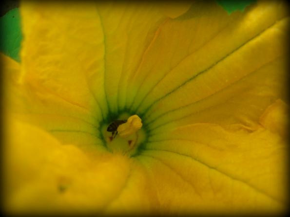 Garden2011-5.jpg