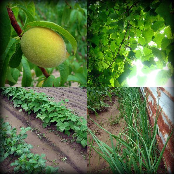 Garden2011-1.jpg