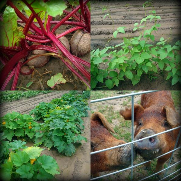 Garden2011-2.jpg