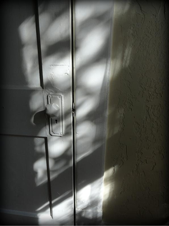 Sunpatches1.jpg