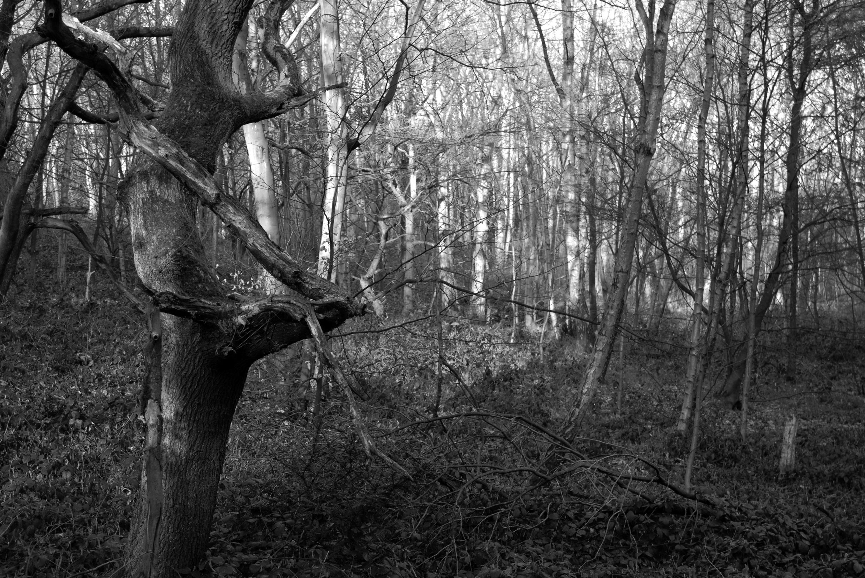 BW Bestwood  G-14.04.2012_Hock 0083.jpg