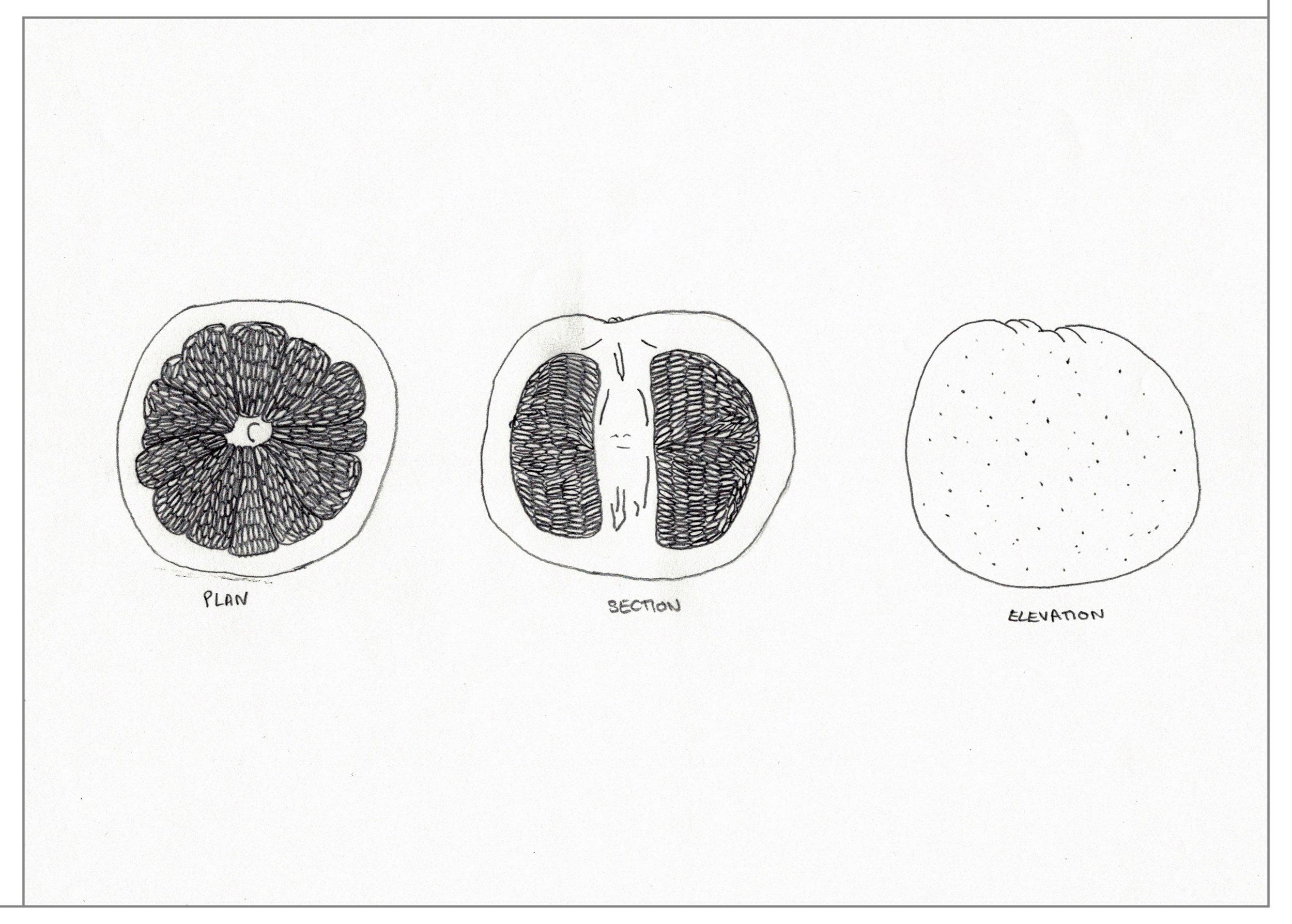 0-grapefruit-lined.jpg