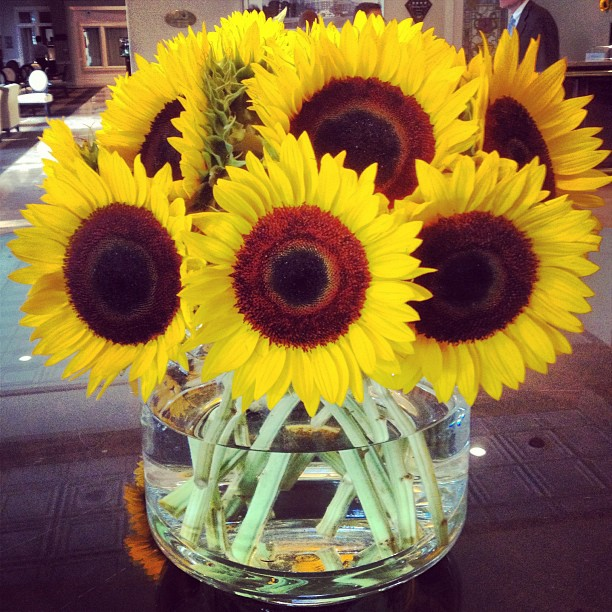 More sunflowers from the #chaseparkplaza in the #cwe