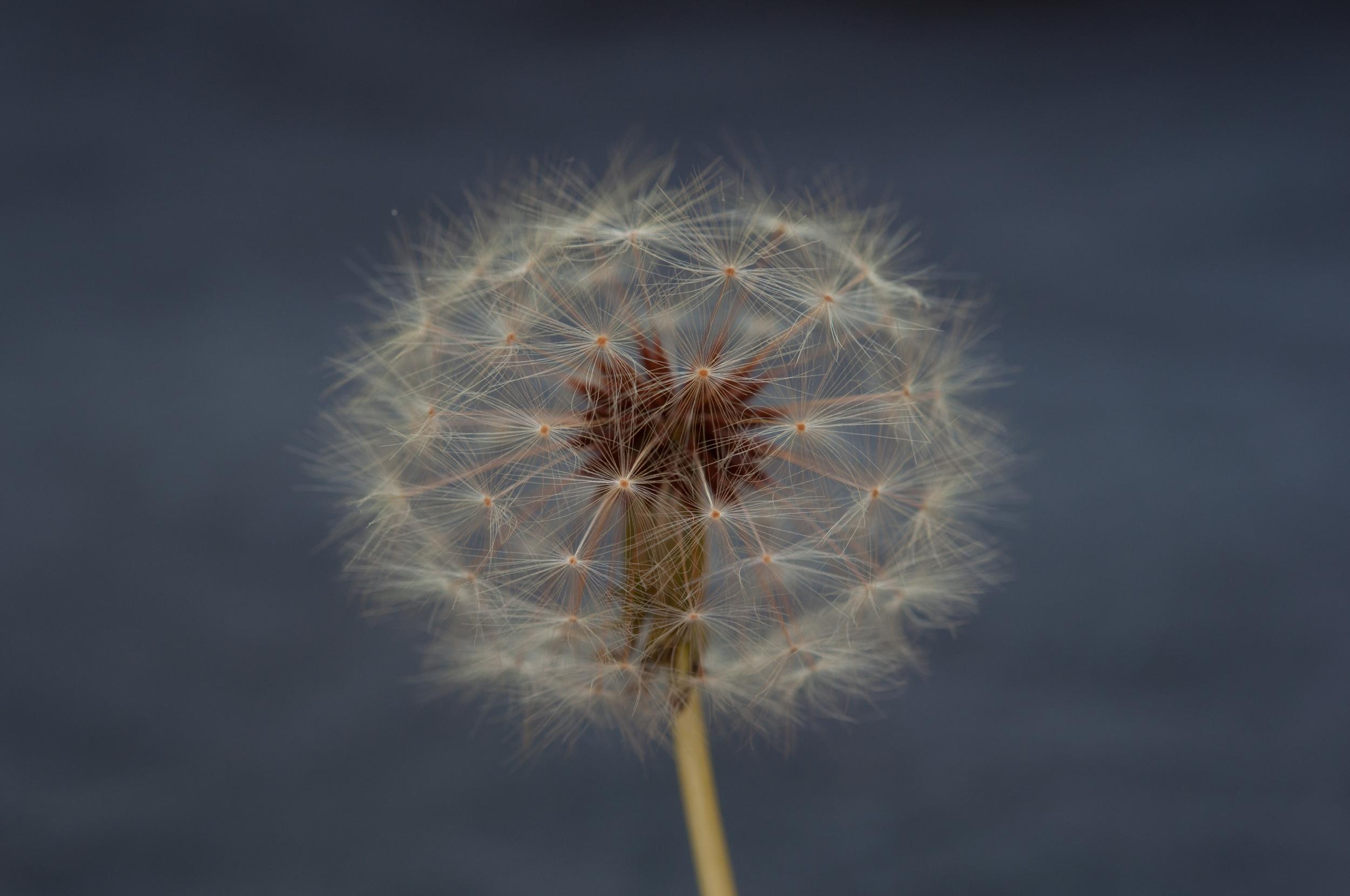 Puffy Flower.jpg