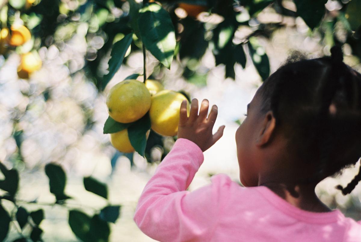 Late Fall Citrus Harvest | Azzari Jarrett