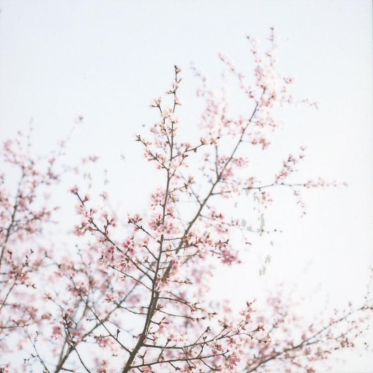 Almost Spring | Hasselblad 500c | Fuji FP 100c | Azzari Jarrett