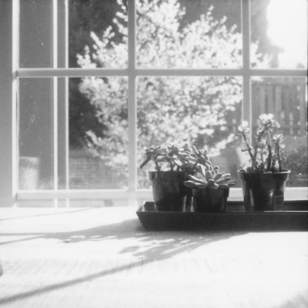 Hasselblad 500c | Fuji FP-3000B Film | Azzari Jarrett