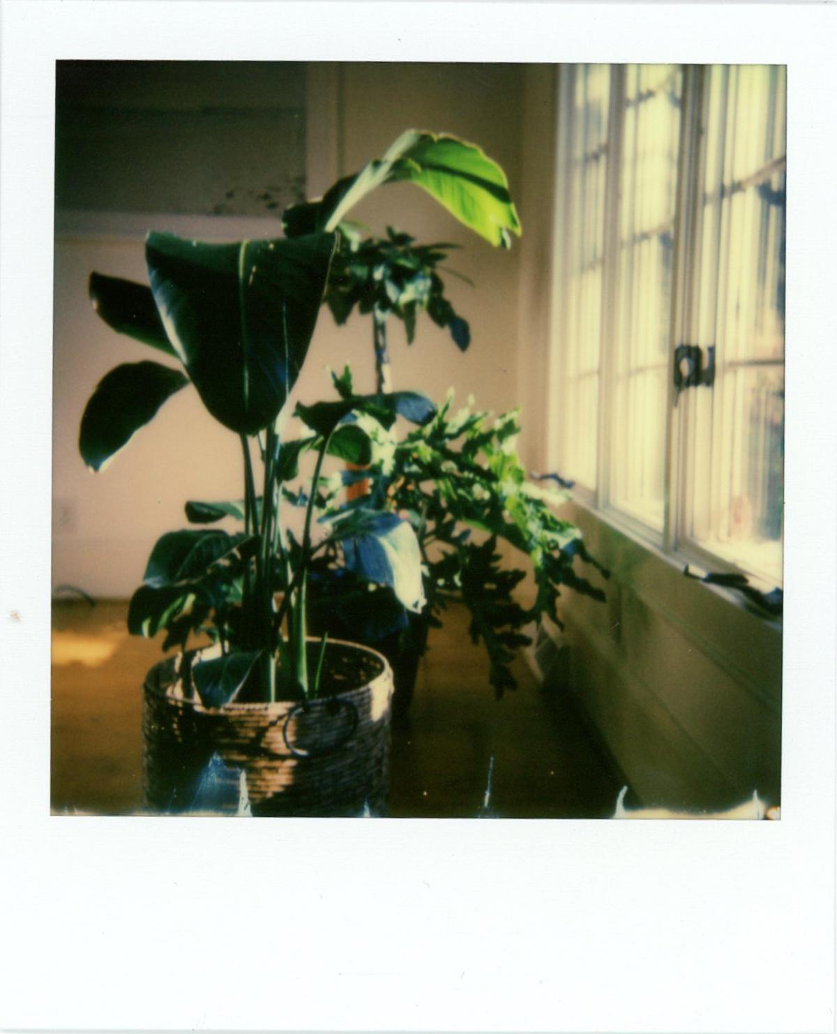 Azzari Jarrett - Polaroid