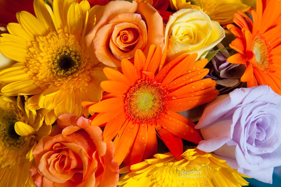 GingerJames_Wedding_Preview_IMG_1148.jpg