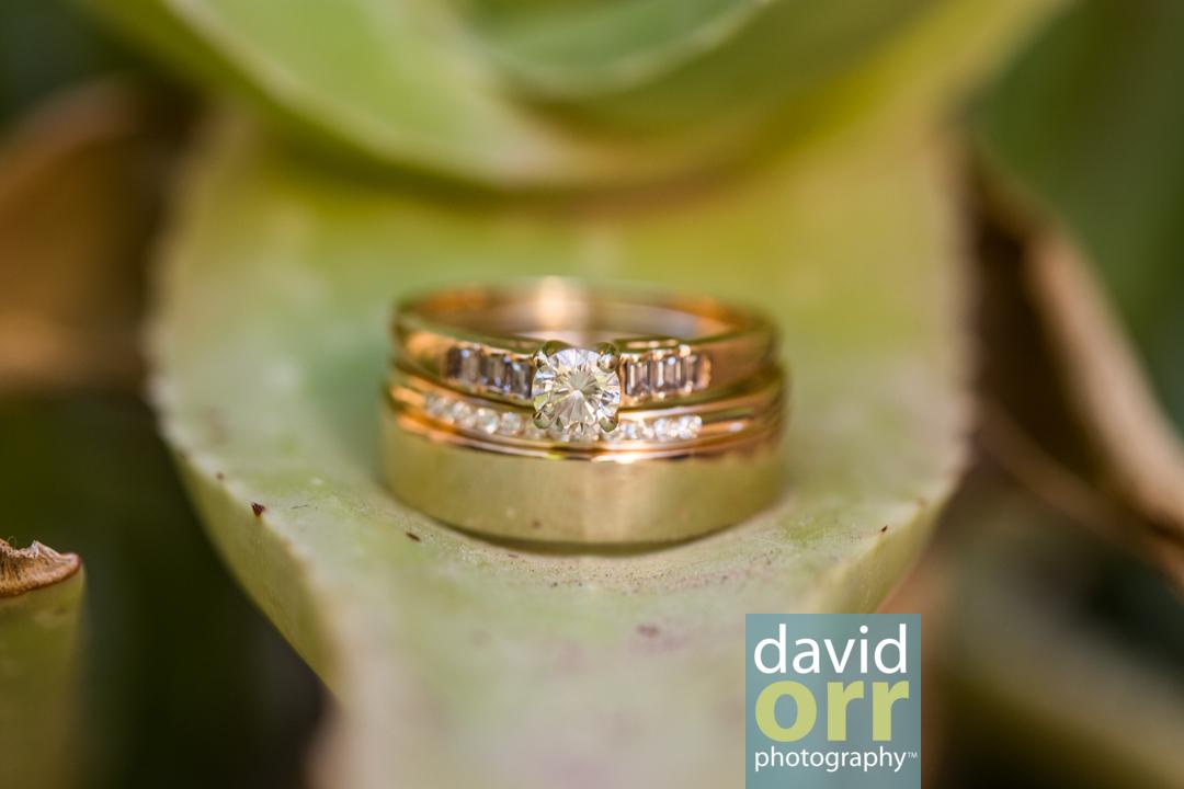 AliciaDaniel_Wedding_Preview_IMG_3987.jpg