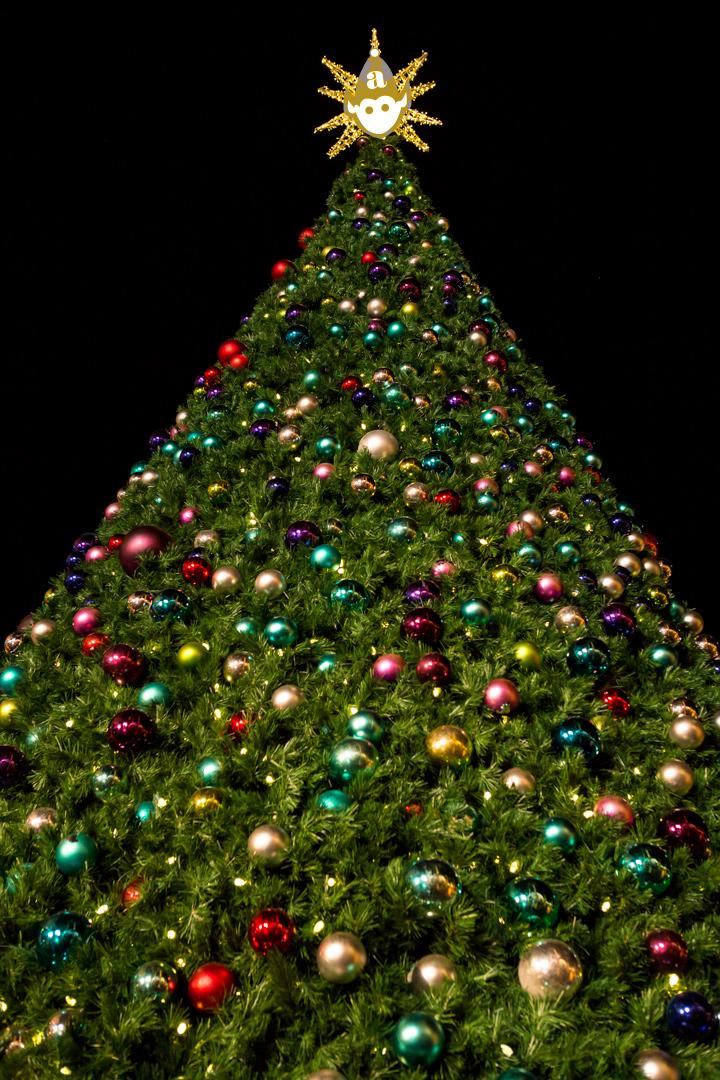 HolidayCard2013_IMG_3855.jpg