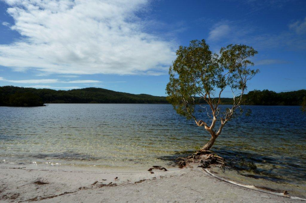 Lake McKenzie, crystal clear water, from your friends at Austrail 4X4