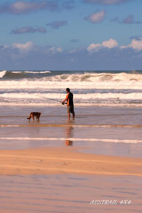 Dingo joining in for a spot of fishing: From our good friends at Austrail4X4
