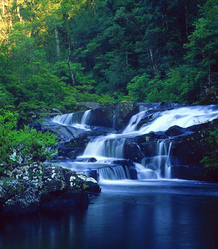 The stunning Gloucester Falls, Barrington Tops National Park.  Photo from ecobiological.com.au.