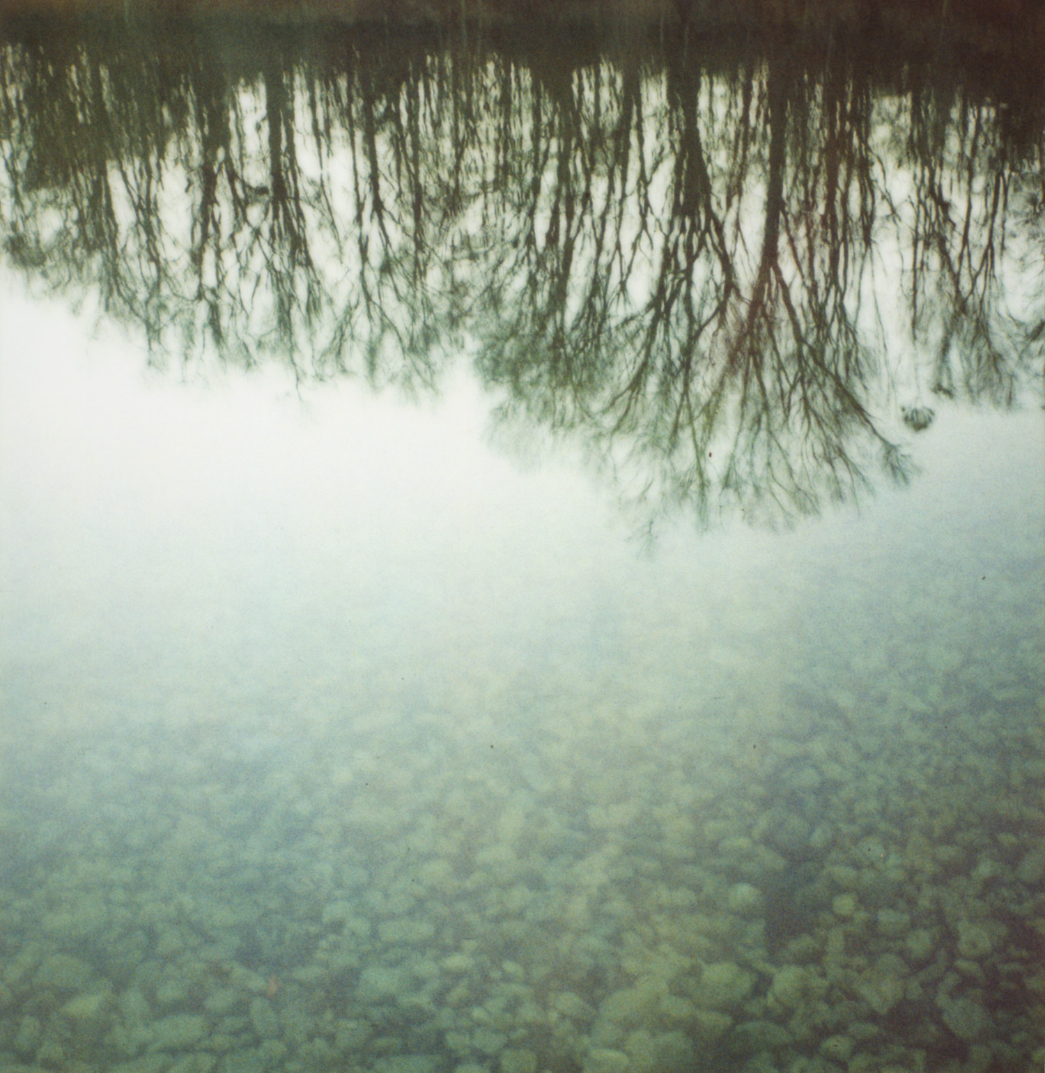 pola_tree_rock_reflection_1500px.jpg