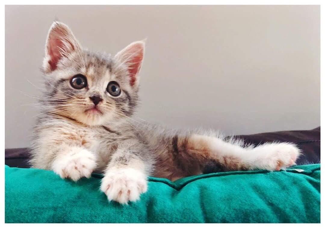 kitten_1_Catio_Nashville.jpg