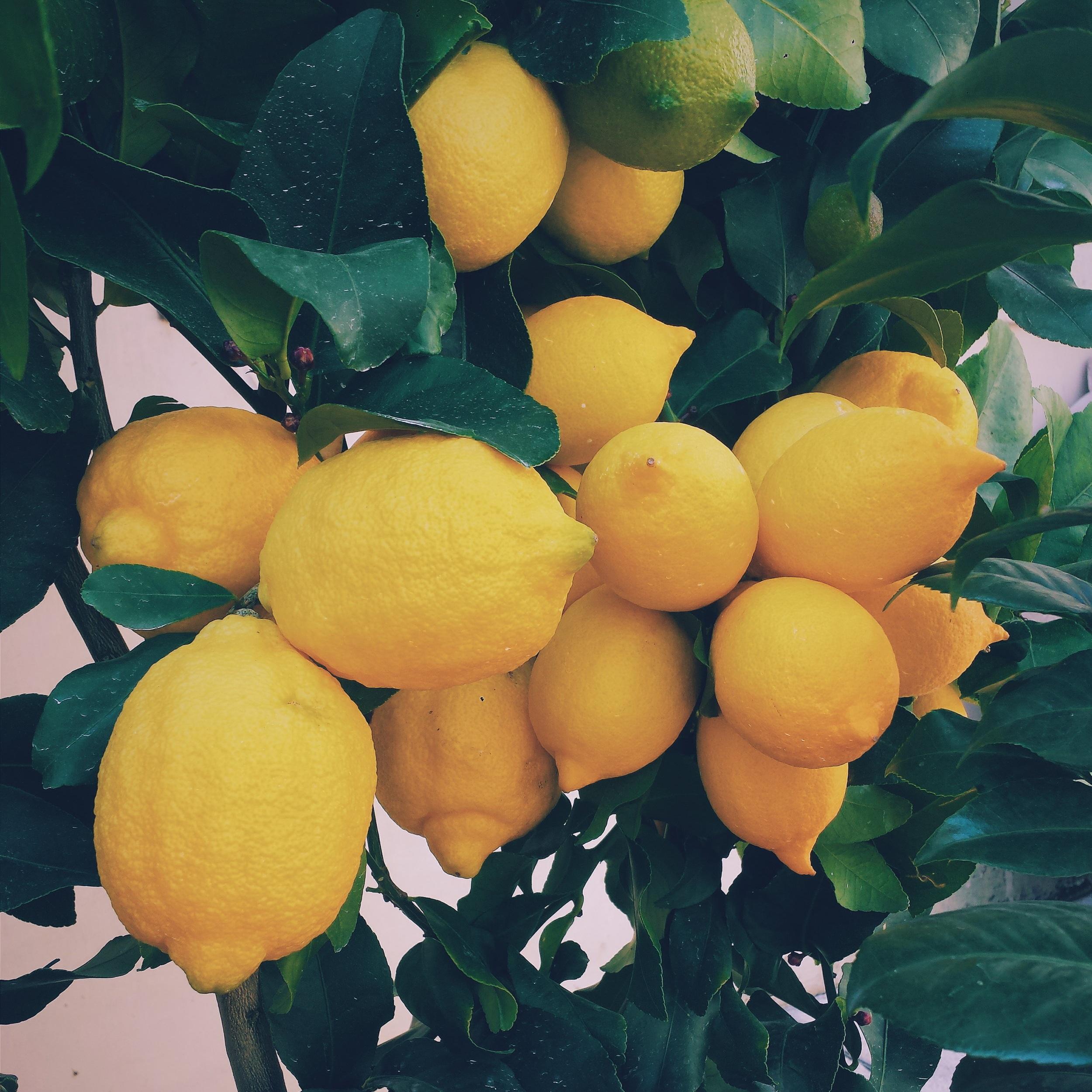 fresh-florida-lemons.jpg