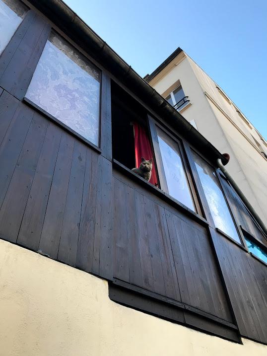 Window Cat in Paris.jpg