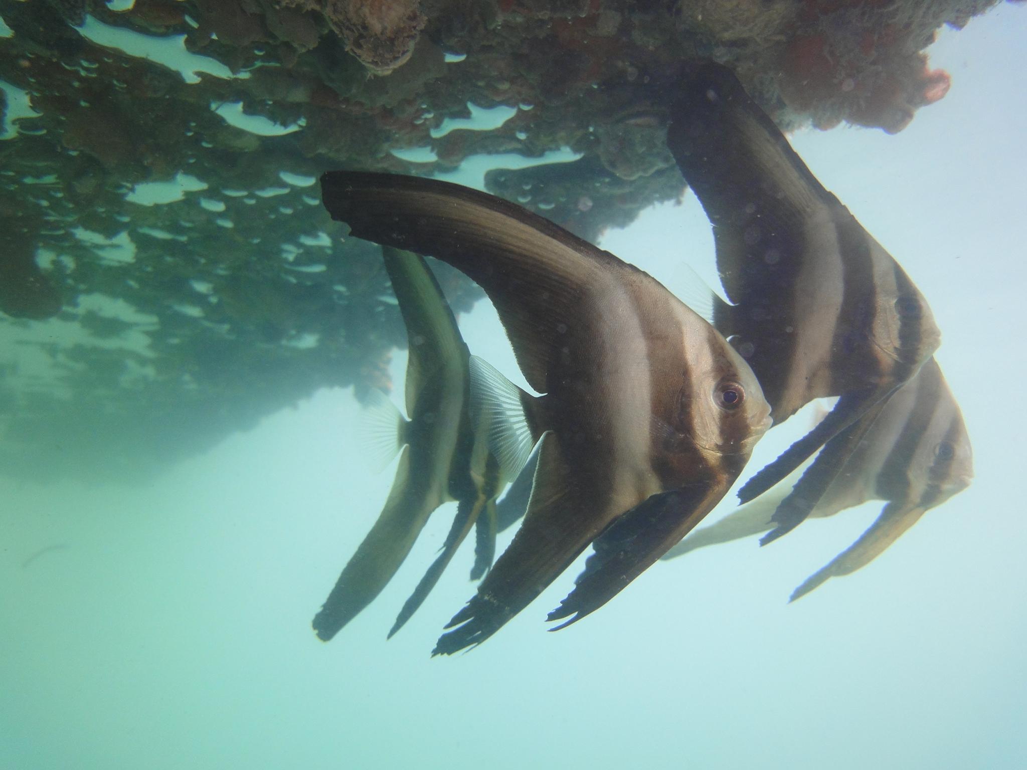 House Reef (7).JPG