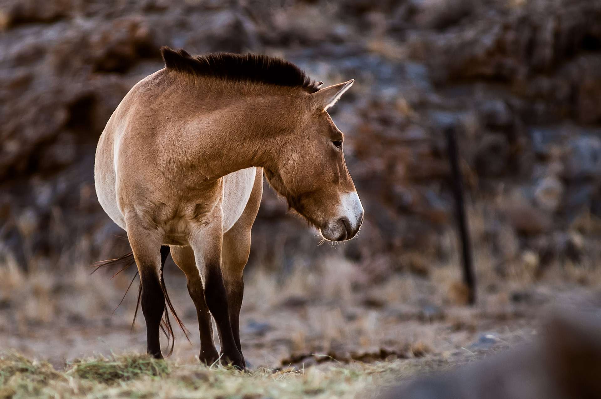 PJJ_Mongolsko2011_01661_19.10.jpg