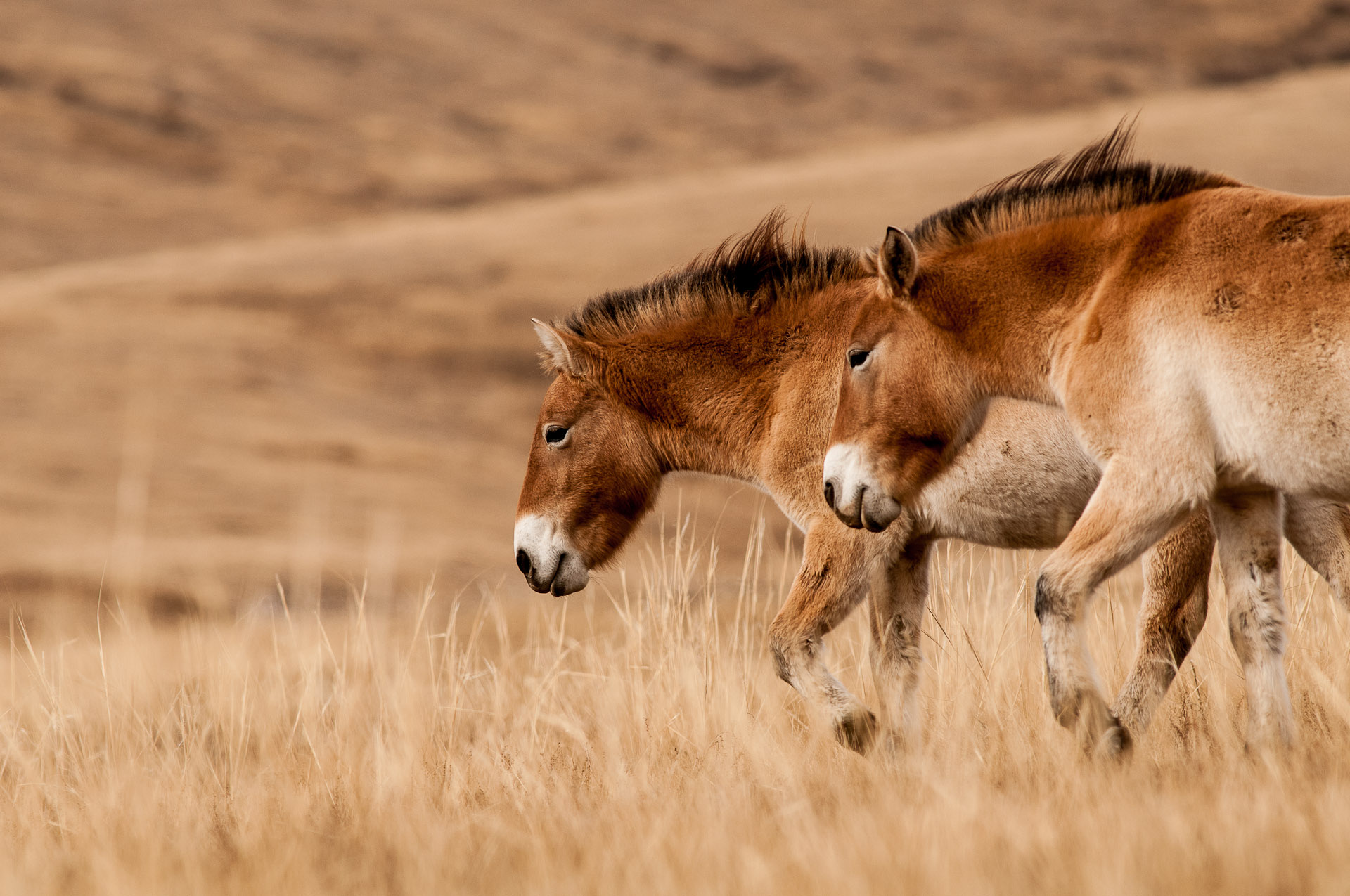 PJJ_Mongolsko2011_07756_25.10.jpg