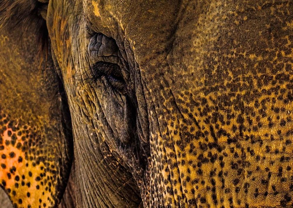 Sloni-pro-Prahu_str-62.jpg