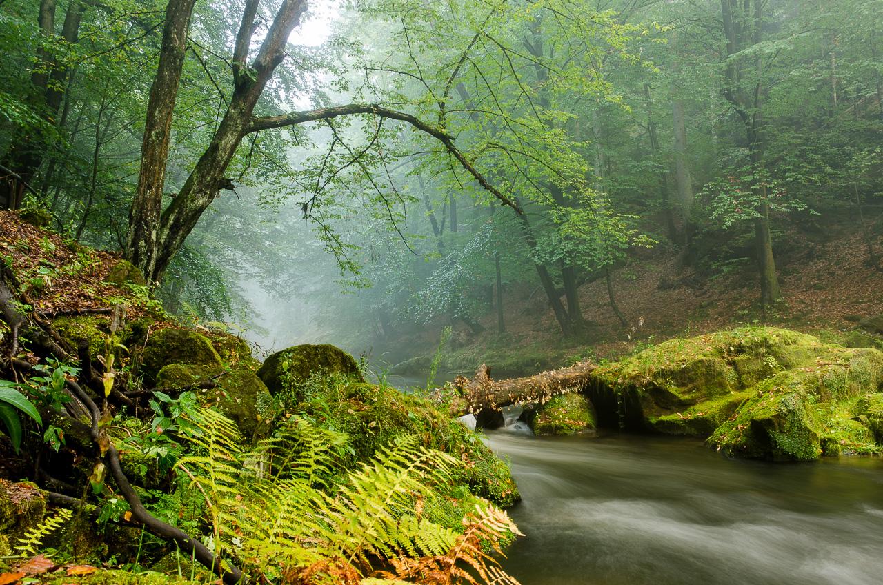 Řeka. Ta kouzelná /  FOTOVIDEO
