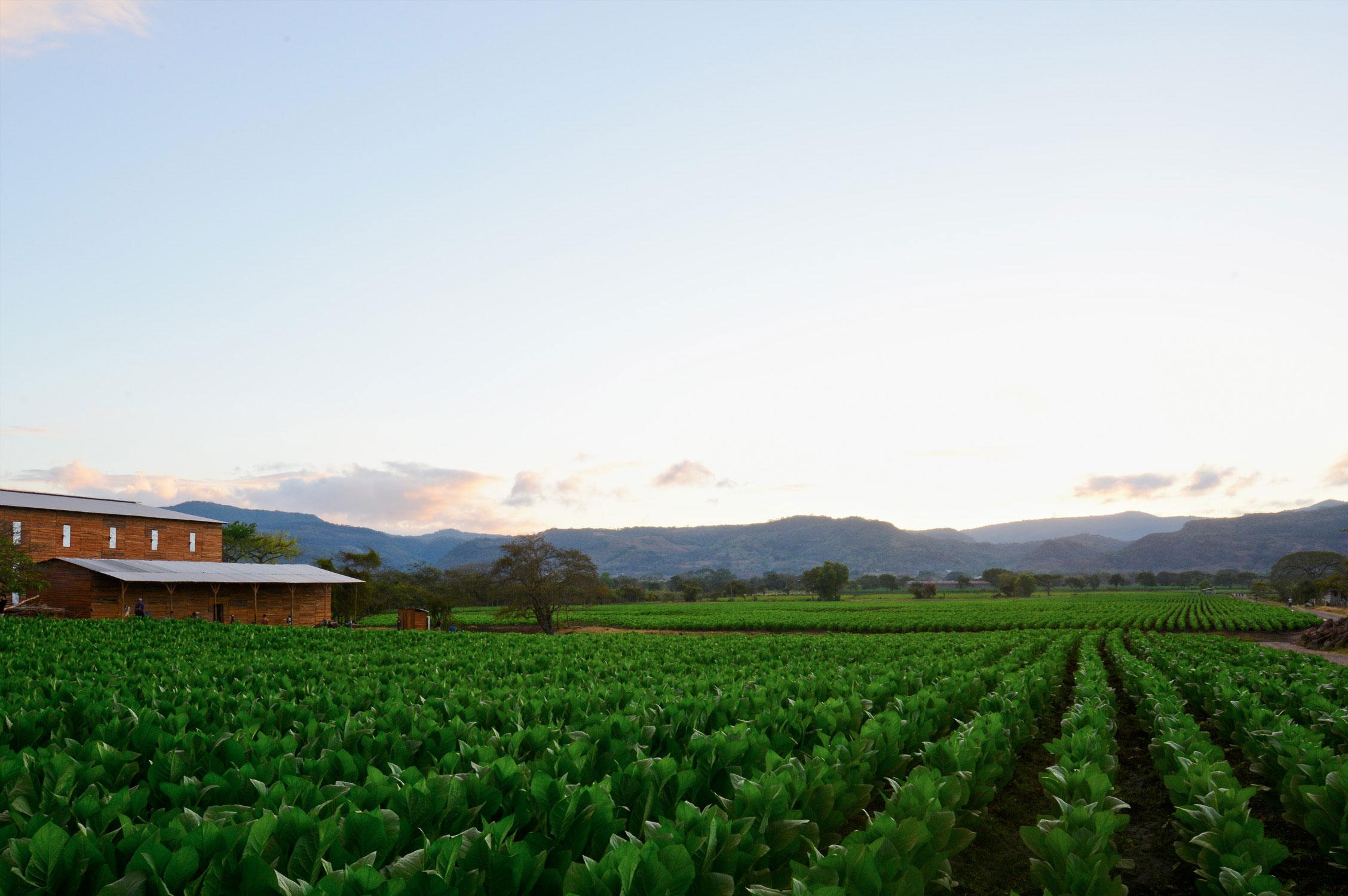 Farm_Before.jpg