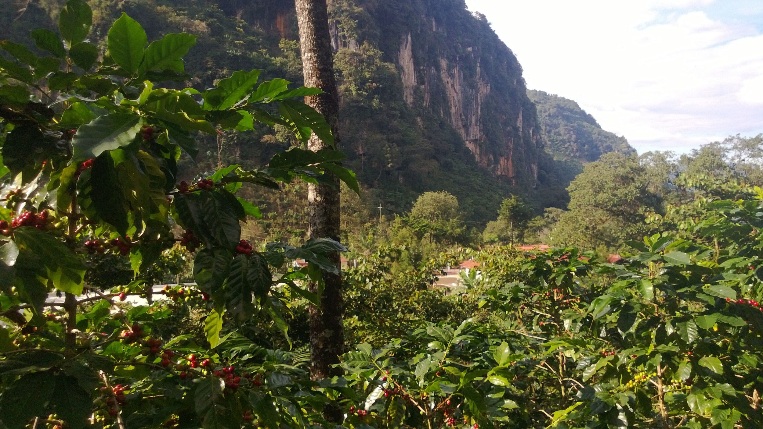 Sunny Guatemala, Photo Courtesy of Silo Coffee Importers