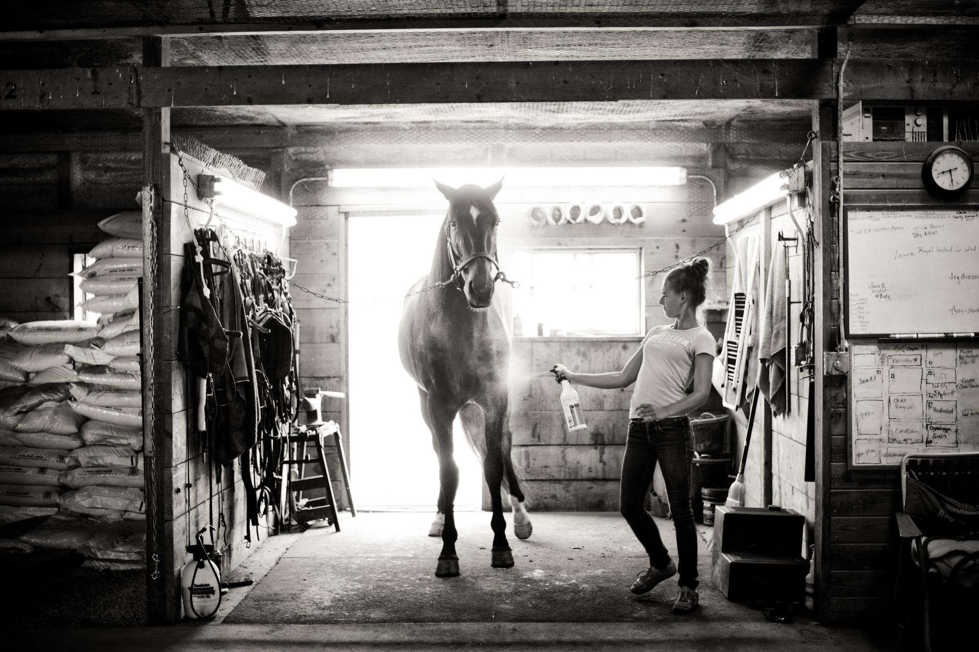 horseblog062.JPG