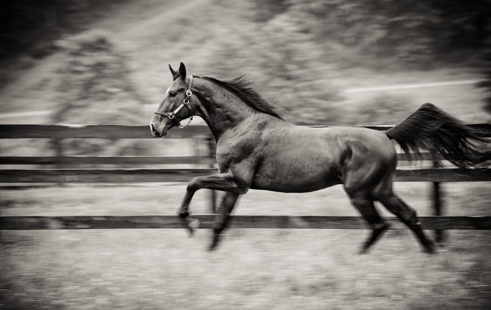 horseblog066.JPG