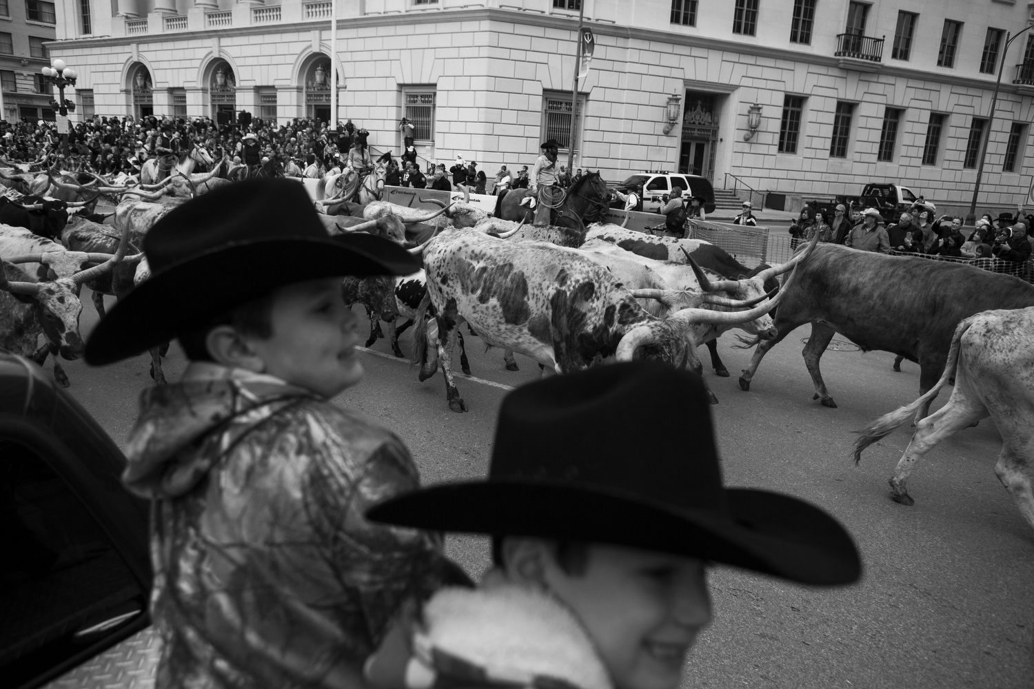 A herd of Longhorns walks down Houston St. during San Antonio Stock Show's annual Western Heritage Parade and Cattle Drive in downtown San Antonio, TX on Saturday, February 7, 2015.