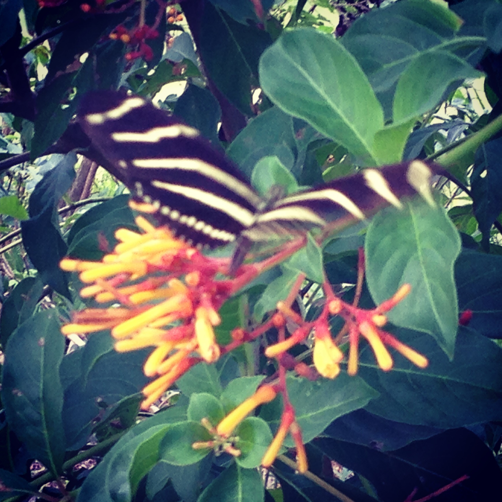 Lynn University has a butterfly garden. Yep.