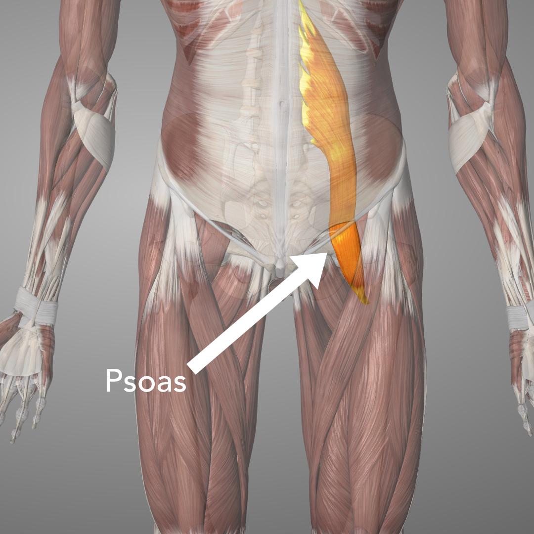 To release the psoas move the ball inside the hip bones and relax the hips flat to the ground, try and relax as best as possible