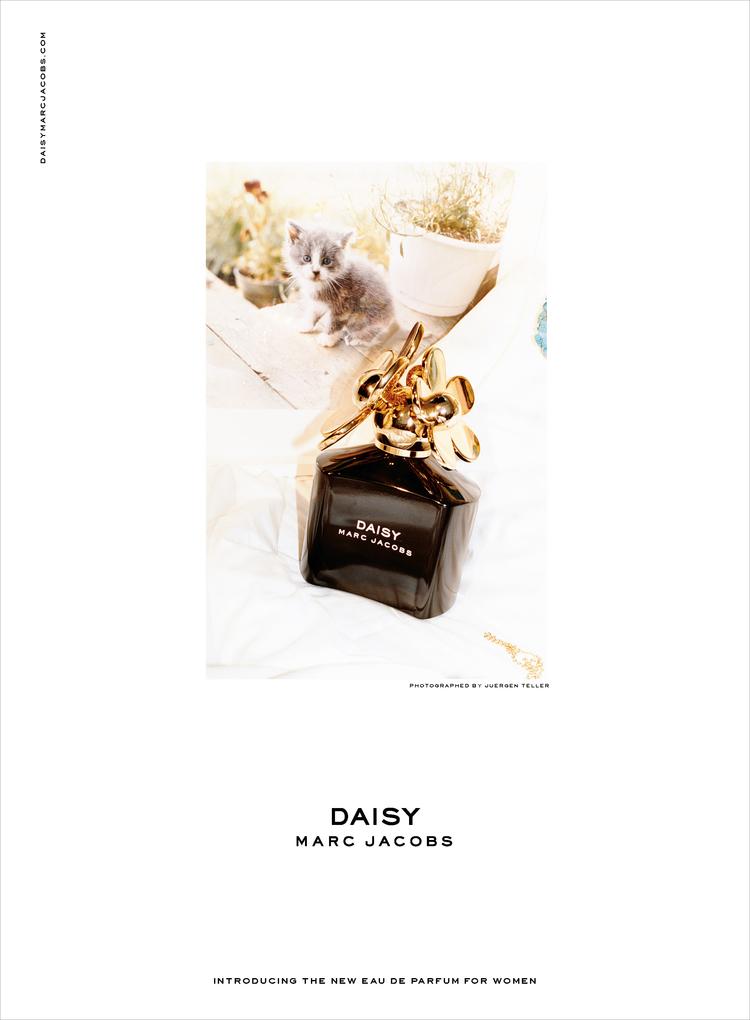 daisy EDP Kitty_outline.jpg