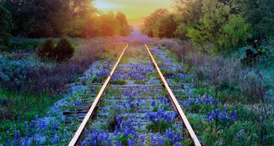 Tracks & Wildflowers.jpg
