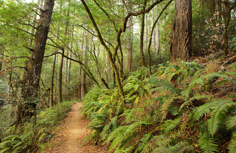 A bit more vibrancy in this section, with sword ferns reaching out to tickle hiker's ankles.