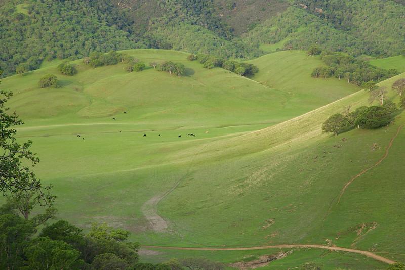 Cows graze at Round Valley Regional Preserve