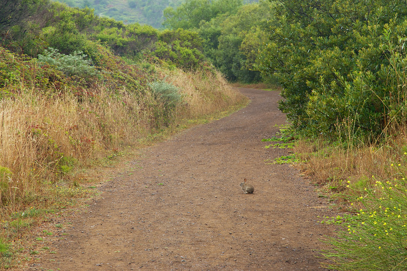 A rabbit on Fox Trail