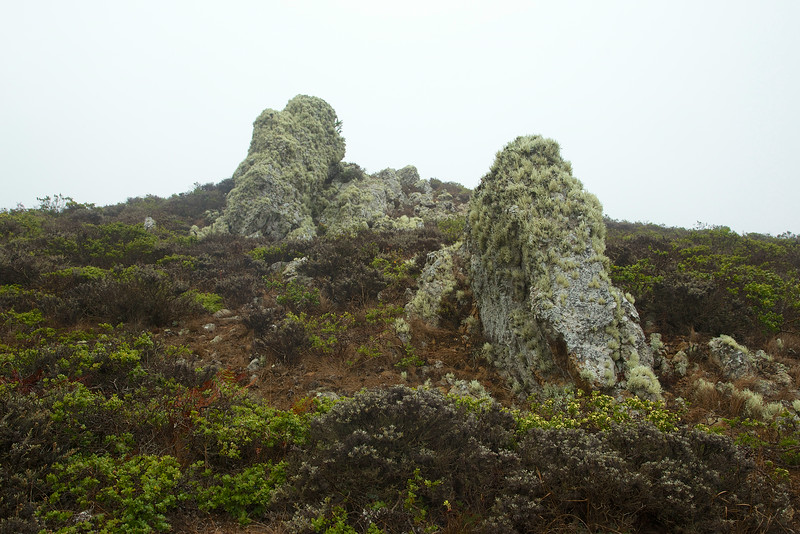 The lichen was soaking up the mist