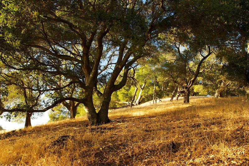 A golden gaze bathes the hillside