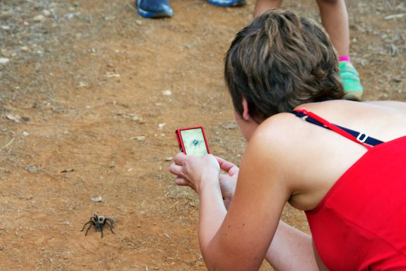 Tarantula Paparazzi