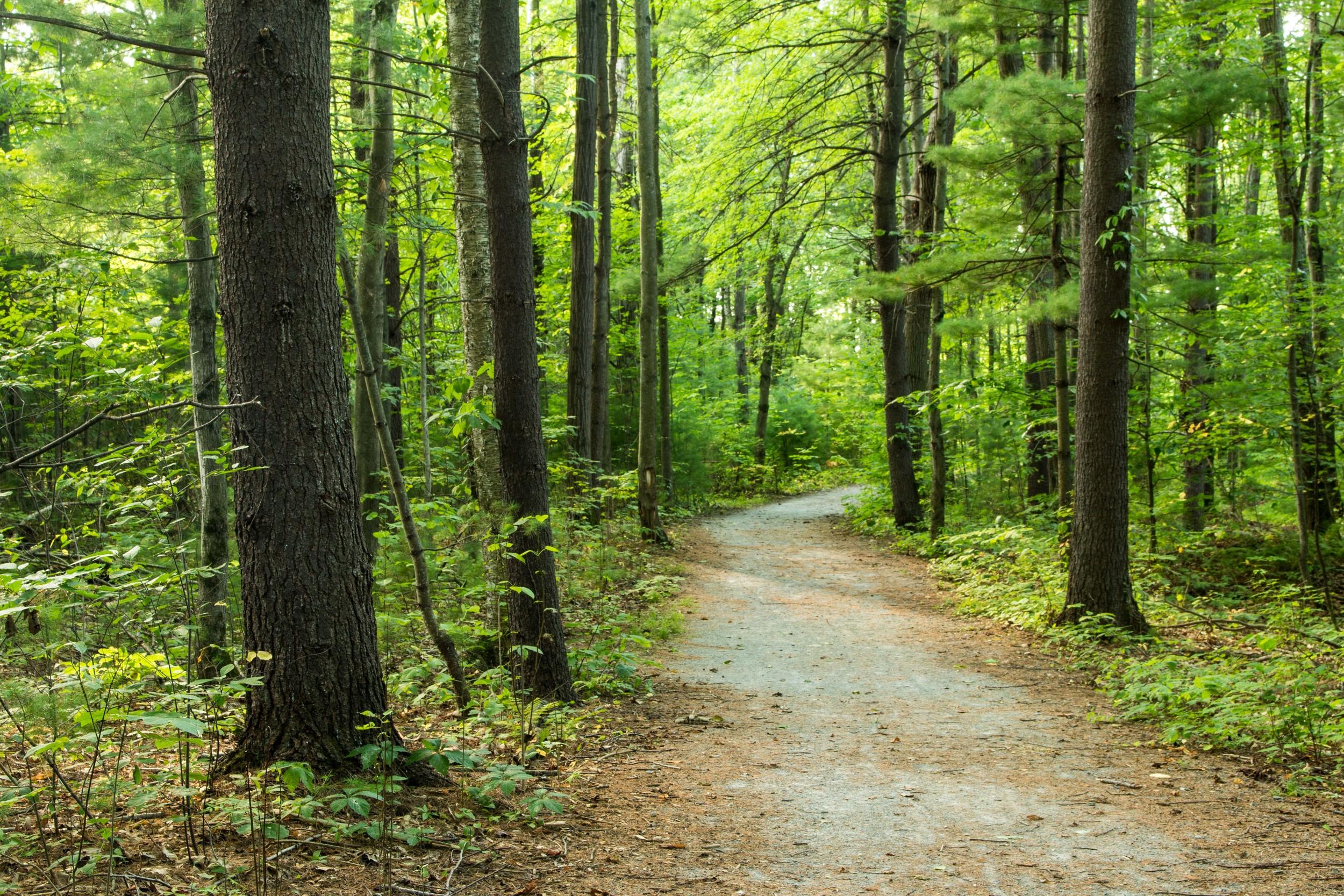 Clifton Park New York Trails-24.jpg