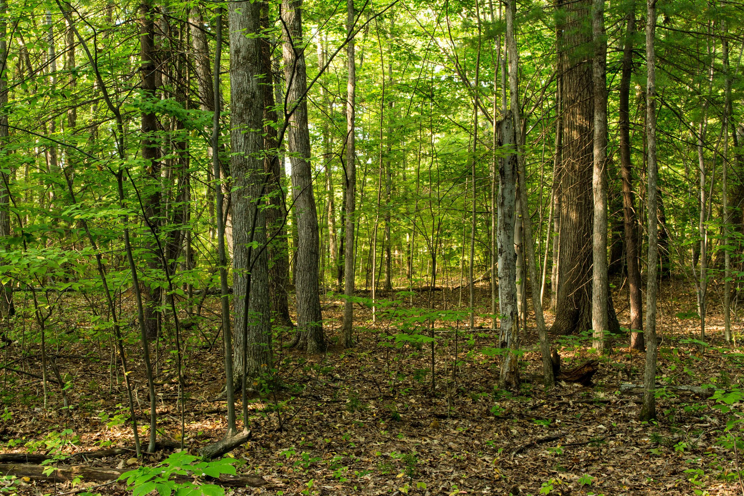 Clifton Park New York Trails-33.jpg