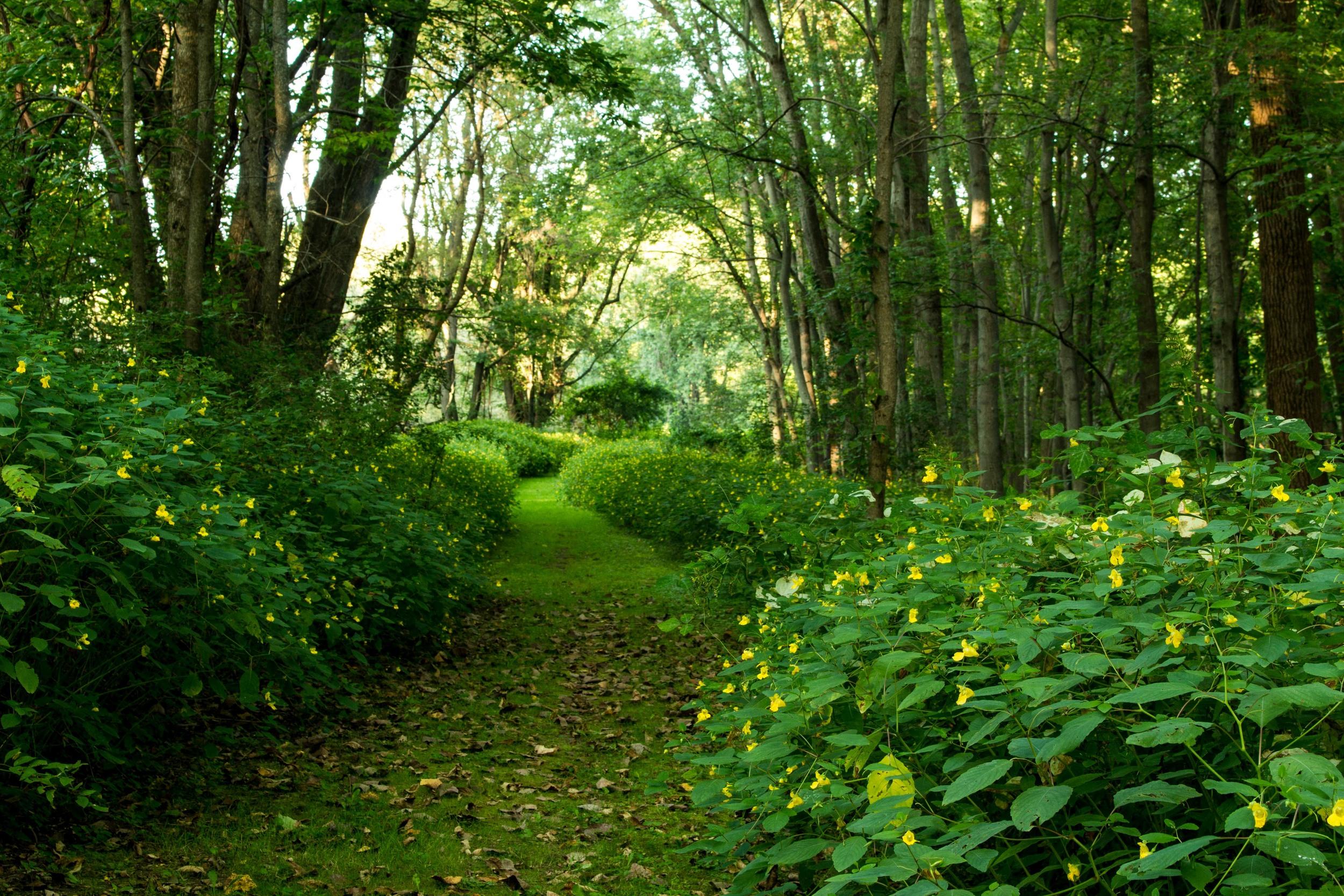 Clifton Park New York Trails-2.jpg