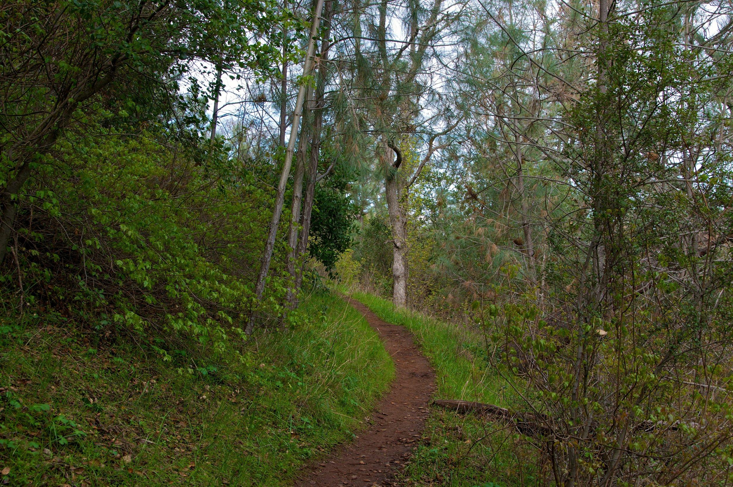 Mt. Diablo Hike 2_12_2011 - 2011-02-21 at 10-41-57.jpg