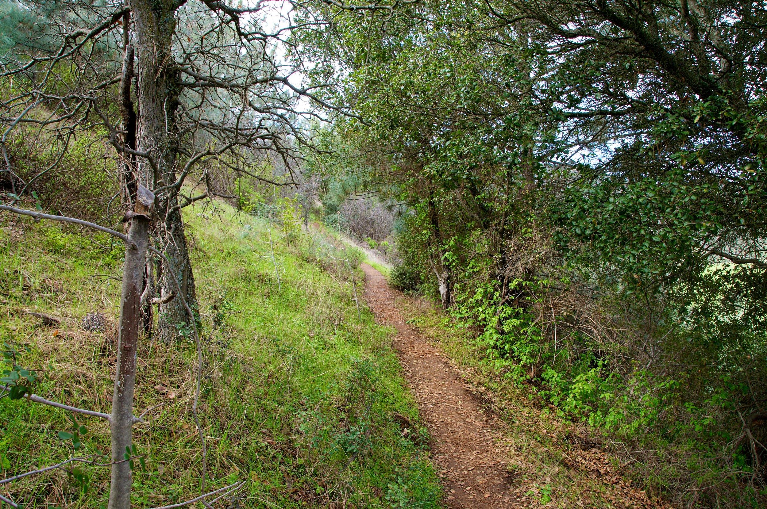 Mt. Diablo Hike 2_12_2011 - 2011-02-21 at 10-47-20.jpg