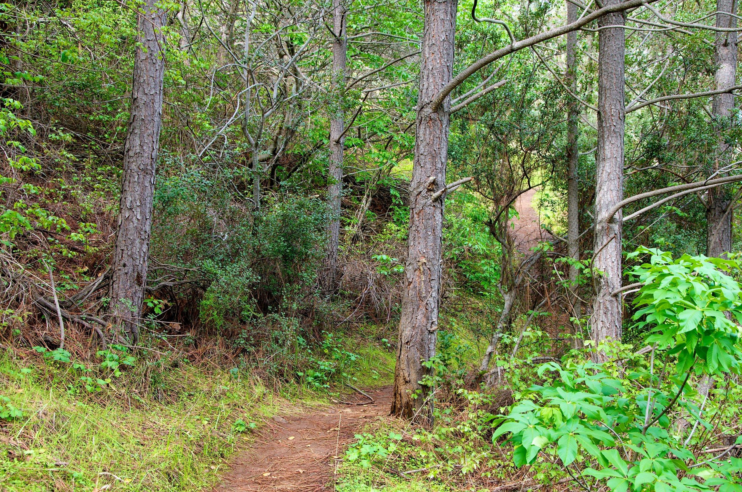 Mt. Diablo Hike 2_12_2011 - 2011-02-21 at 10-42-59.jpg