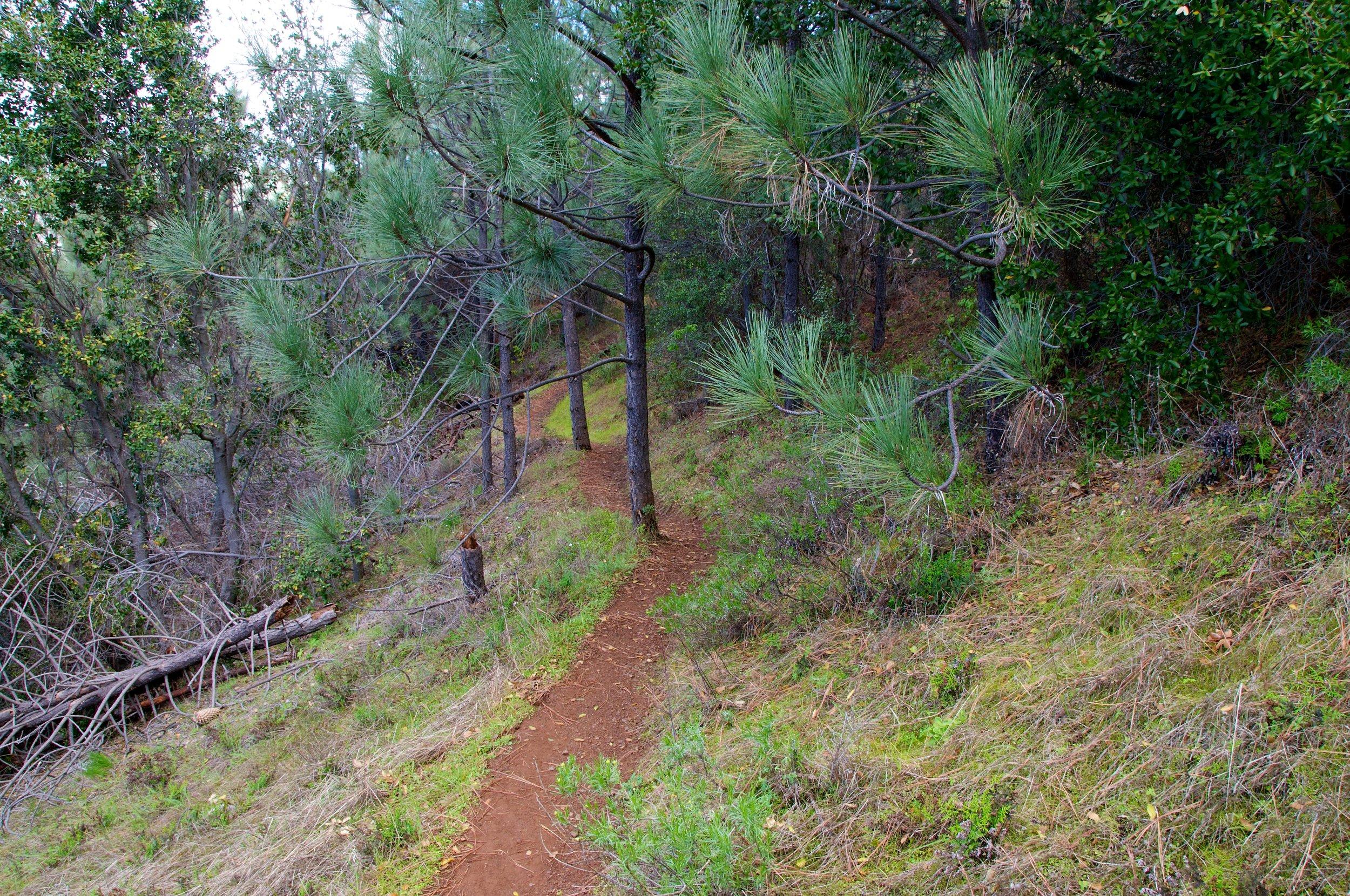 Mt. Diablo Hike 2_12_2011 - 2011-02-21 at 11-32-27.jpg